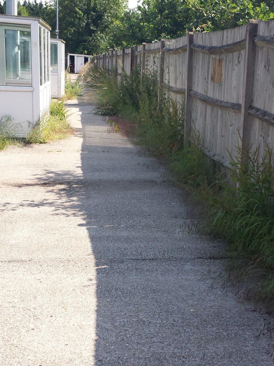 weeds behind dugouts